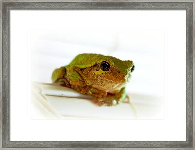 Framed Print featuring the photograph Im Watching You by Peggy Franz