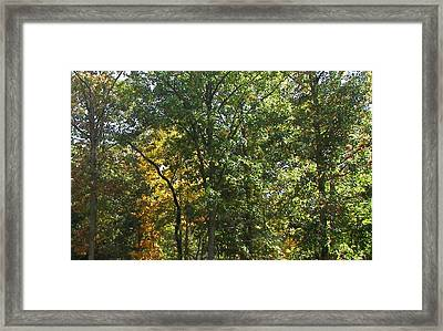 Framed Print featuring the photograph Image Of Fall by Pamela Hyde Wilson