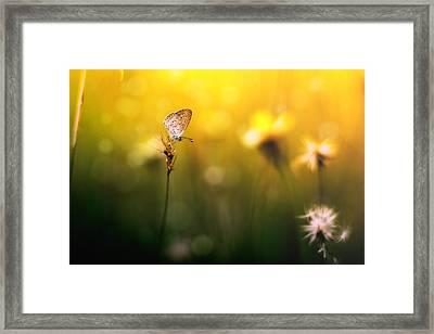 Imagine Framed Print by Yustus Waskito Budi P