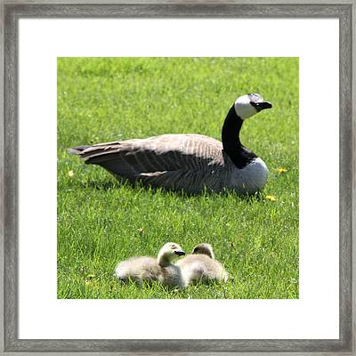 Imitating Momma Framed Print by Mark J Seefeldt