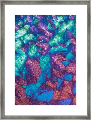 Immunoglobulin Crystals, Light Micrograph Framed Print by David Parker