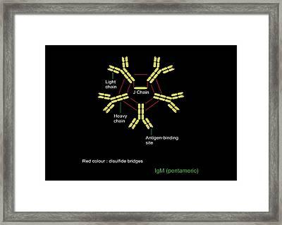 Immunoglobulin Pentamer, Artwork Framed Print