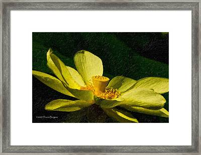 Framed Print featuring the photograph Impasto Lotus by Travis Burgess