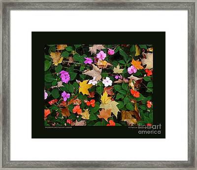 Framed Print featuring the photograph Impatiens And Autumn Leaves by Patricia Overmoyer