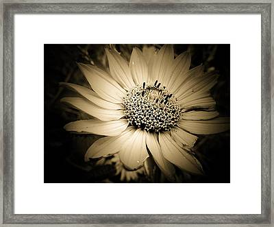 Imperfection Framed Print by Beth Akerman