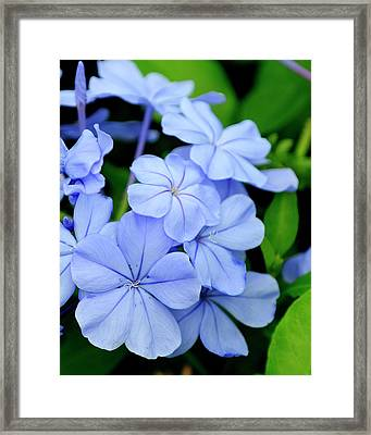 Imperial Blue Framed Print