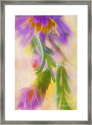 Impression Of Asters Framed Print by Judi Bagwell