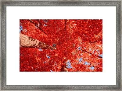 Impression Of Red Maple Framed Print by Charline Xia