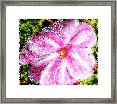 Impressionistic  Candy Cane Impatiens Framed Print by Barbara Griffin
