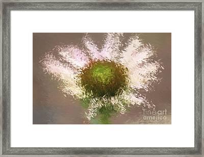 Impressionistic Echinacea Framed Print by Deborah Benoit