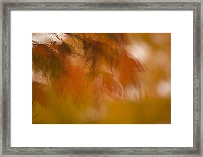 Impressionistic Maple Framed Print