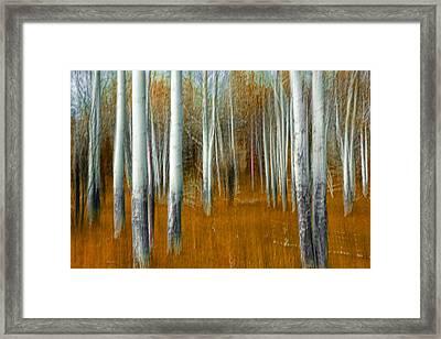Impressionistic Orange Forest Framed Print by Randall Nyhof