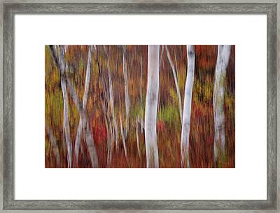 Abstract Impressions Vermont Birch Forest  Framed Print by Thomas Schoeller