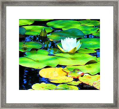 Impressions Of A White Water Lily Framed Print