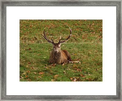 In A Bit Of A Rut Framed Print by Steve Watson