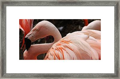 In A Crowd Framed Print by Bruce Bley