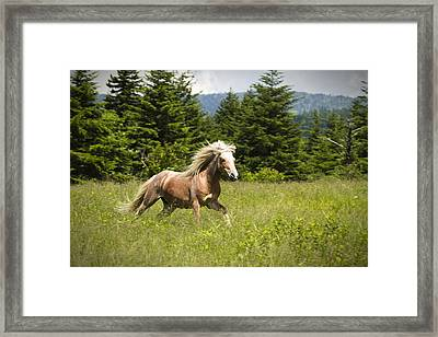 In A Hurry Framed Print by Carrie Cranwill