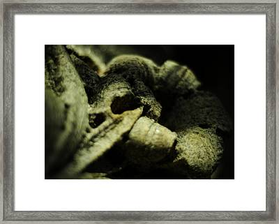 In A Little Garden Framed Print