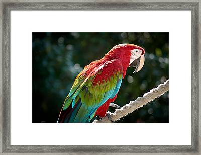 In All His Finery Framed Print