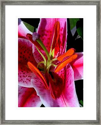 In All My Glory Framed Print