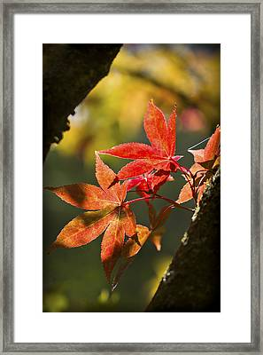 In Between... Framed Print by Clare Bambers