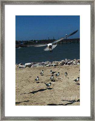 In Comming Framed Print