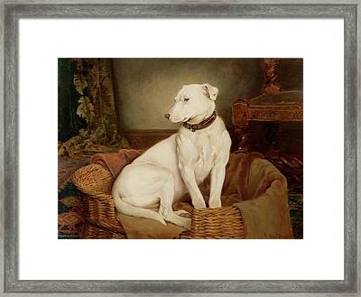 In Disgrace Framed Print by William Woodhouse