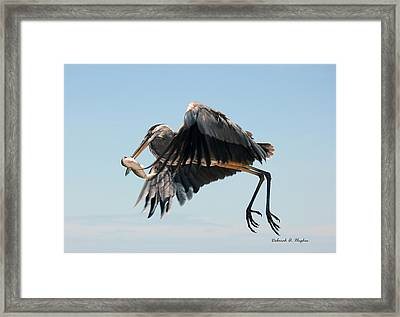 In Flight 3 Framed Print