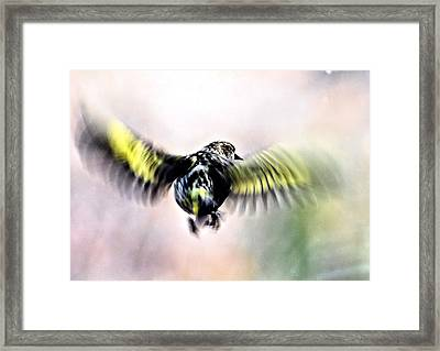 In Flight Abstract Framed Print by Don Mann