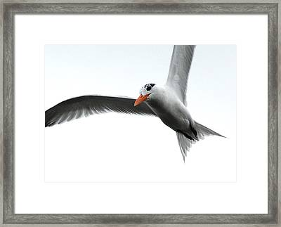 Framed Print featuring the photograph In Flight by Kathy Gibbons
