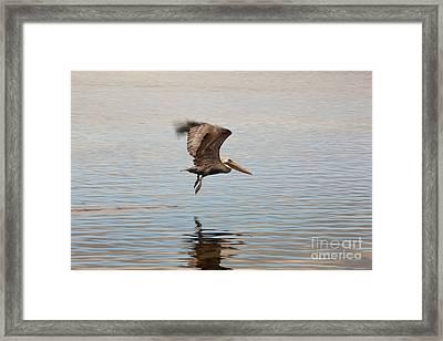 In Flight Framed Print by Keith Kapple