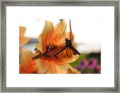 Framed Print featuring the photograph In Flight... by Michael Frank Jr