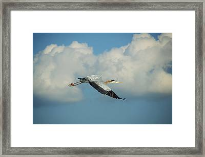 In Flight Framed Print by Steven Michael