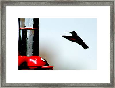 Framed Print featuring the photograph In Flight by Wanda Brandon
