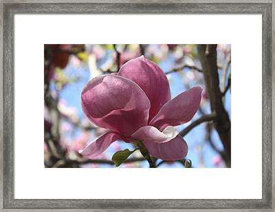 In Full Bloom Nb Framed Print by Susan Alvaro