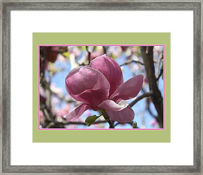In Full Bloom Framed Print by Susan Alvaro