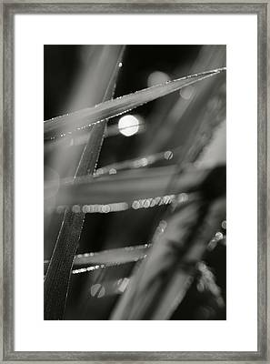 In Grass... Framed Print by Jaromir Hron