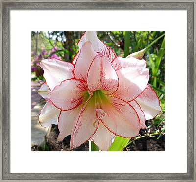 In His Garden Framed Print by Gregory Young