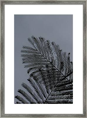 In Love Framed Print by Vishakha Bhagat