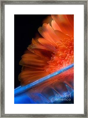 Framed Print featuring the photograph In My Dreams- Beautiful Compliments by Janie Johnson