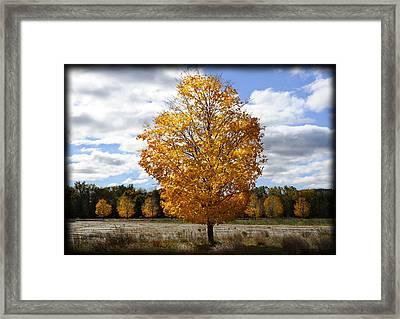 In My Dreams... Framed Print by Luke Moore