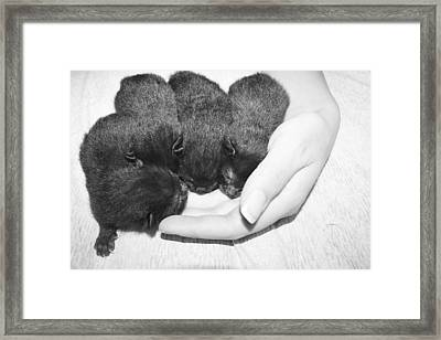In My Hand Framed Print by Heather  Boyd