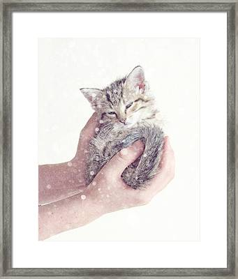 In Safe Hands  Framed Print by Amy Tyler