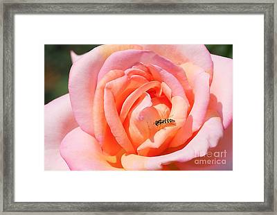 Framed Print featuring the photograph In Search Of Nectar by Fotosas Photography
