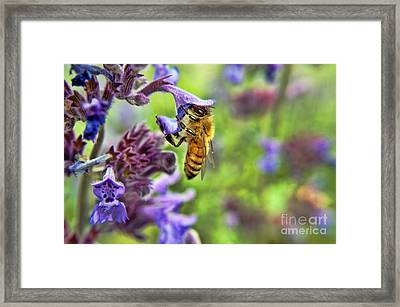 In Search Of Pollen Framed Print