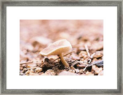 In The Begining Framed Print by