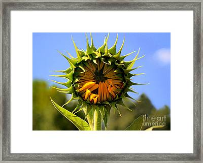 In The Beginning  Framed Print by Tammy Cantrell