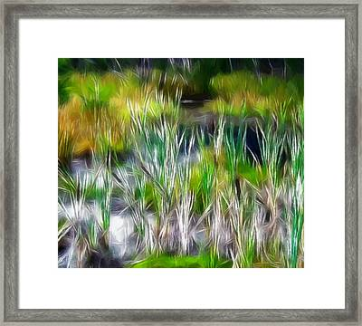 In The Bog Framed Print
