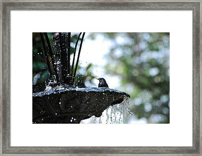 Framed Print featuring the photograph In The Cool Of The Morning #1 by Linda Cox