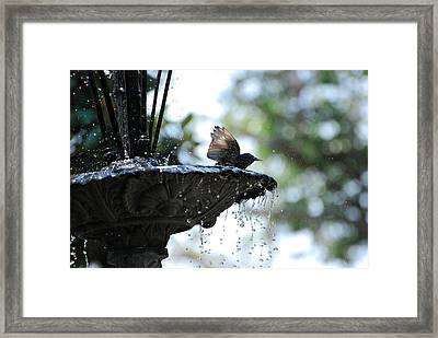 Framed Print featuring the photograph In The Cool Of The Morning #2 by Linda Cox